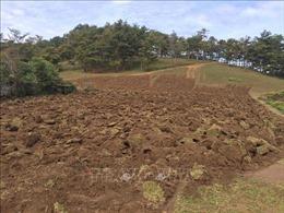 Bị phạt 241 triệu đồng do tự ý chuyển đổi đất rừng sang mục đích khác