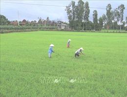 Thủ tướng cho phép Hải Dương, Sóc Trăng chuyển đổi mục đích sử dụng đất trồng lúa