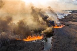 Cháy rừng khiến không khí ở Thủ đô Kiev, Ukraine ô nhiễm nhất thế giới