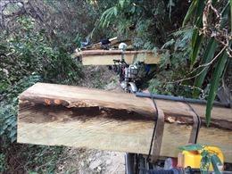 Bộ Nông nghiệp báo cáo Thủ tướng về việc ngăn chặn, xử lý phá rừng tại Kon Tum