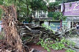 Mưa giông lớn quật đổ cây cổ thụ tại Huế