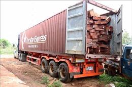 Phát hiện vụ vận chuyển gỗ trái phép quy mô lớn tại Chư Sê, Gia Lai