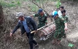 Sớm chấm dứt nhập lậu lợn vào Việt Nam