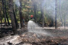 Cảnh báo tình trạng bất cẩn gây cháy rừng ở Thừa Thiên - Huế