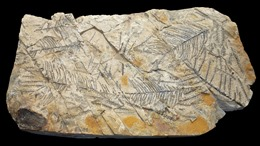 Phát hiện hóa thạch gỗ 110 triệu năm tuổi tại miền Đông Trung Quốc