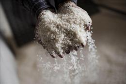 Xuất cấp gạo dự trữ quốc gia cho ba tỉnh bị thiên tai, mưa lũ