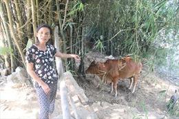 Những ngôi làng 'ngâm chân' trong lũ sông Lam - Bài cuối: Về nơi bò thi… hoa hậu
