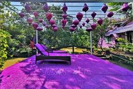 'Căn nhà màu tím' độc đáo ở Cần Thơ