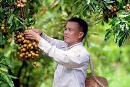 Áp dụng kỹ thuật mới, chuyển đổi cơ cấu cây trồng để làm giàu