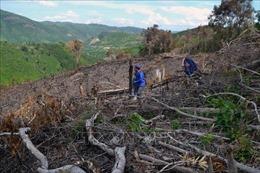 Sớm điều tra, xử lý các vụ phá rừng tại xã Phú Mỡ ở Phú Yên