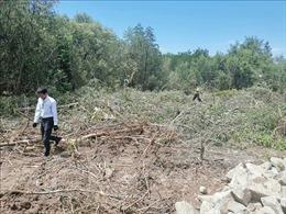 Thông tin về vụ gần 5.000 m2 rừng phòng hộ ven biển Sóc Trăng bị chặt phá