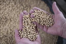Thị trường nông sản tuần qua: Giá cà phê, tiêu giảm mạnh