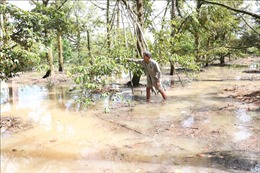 Sạt lở đê bao gây ngập úng hơn 40 ha vườn cây ăn trái