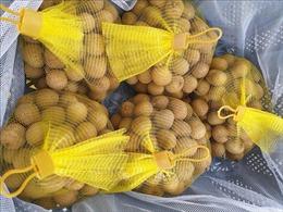 Hàng chục tấn nhãn tươi Việt Nam cập cảng thị trường Australia
