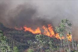 Huy động hàng trăm người chữa cháy rừng ở Đà Nẵng