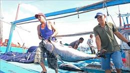 Đa dạng hóa sản phẩm cá ngừ, đẩy mạnh tiêu thụ trong nước