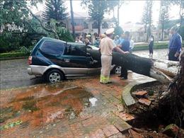 Lâm Đồng: Bão số 2 làm nhiều cây xanh đổ gãy, 1 người bị thương nhẹ