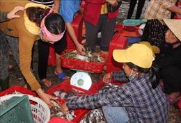 Độc đáo chợ cá Cồn Gò, Hà Tĩnh