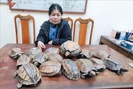 Hà Tĩnh phát hiện, thu giữ 15 con rùa không có giấy tờ, chứng minh nguồn gốc
