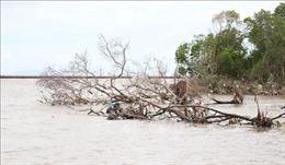 Khẩn trương thực hiện Kết luận Kiểm toán liên quan đến Dự án đầu tư nâng cấp đê biển Tây, Cà Mau