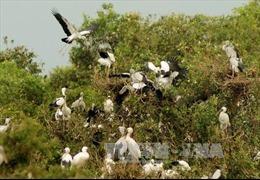 Đồng Tháp bảo tồn và phát triển đa dạng sinh học 3 vùng đất ngập nước