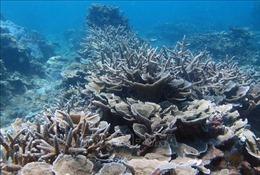 Bảo tồn biển Việt Nam - Bài cuối: Giải pháp để phát triển bền vững kinh tế biển