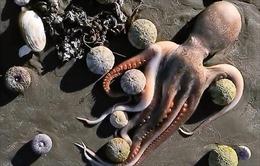 Sinh vật biển chết hàng loạt ở bán đảo Kamchatka của Nga