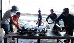 Hiệp định EVFTA: Cơ hội lớn cho ngành chế biến cá ngừ