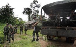 Brazil tiếp tục triển khai binh sĩ ngăn chặn nạn phá rừng tại Amazon