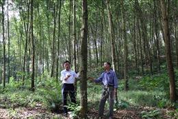 Yên Bái trồng mới hơn 16.700 ha rừng