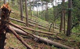 Vụ phá rừng phòng hộ ở Lâm Đồng: Nhiều dự án để xảy ra mất rừng