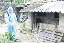 Kiểm soát chặt, phòng ngừa sự lây lan của dịch tả lợn châu Phi