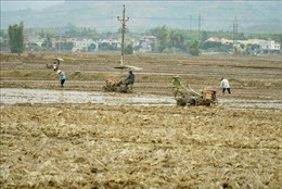 Bố trí lực lượng sẵn sàng lấy nước đợt 1 cho gieo cấy vụ Đông Xuân