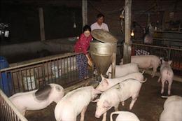 Sớm thành lập Hội đồng khoa học quốc gia đánh giá vaccine dịch tả lợn châu Phi