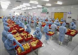 Hiệp định RCEP: Cơ hội phát triển chuỗi giá trị nông sản Việt ra thế giới