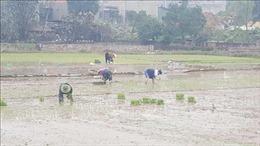 Vận hành các công trình đảm bảo lấy đủ nước cho gieo cấy trong đợt 3