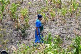 Liên hợp quốc cảnh báo nạn đói gia tăng nhanh chóng ở Trung Mỹ