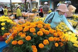 Đắt hàng hoa lan và hoa vạn thọ Pháp vào dịp cận Tết