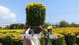 Sức mua hoa Tết ở Phú Yên bắt đầu tăng