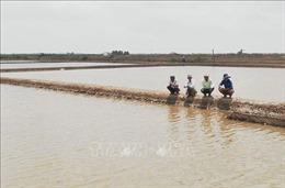 Nông dân kỳ vọng tăng thu nhập từ nuôi artemia