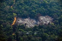 94% hoạt động khai thác rừng Amazon ở Brazil là phi pháp