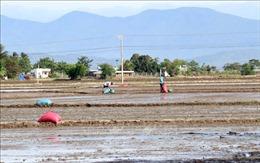 Ninh Thuận điều tiết nước tưới cho trên 26.000 ha vụ Hè Thu