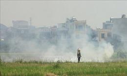 Xử lý nghiêm tình trạng đốt rơm rạ ở Thái Bình