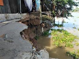 Xuất hiện hai đoạn sạt lở dài 50m tại huyện Chợ Mới, An Giang