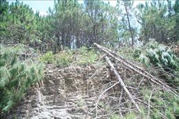 Điều tra vụ phá rừng dưới chân Núi Voi theo phản ánh của báo chí