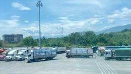 Xuất khẩu gần 11.000 tấn vải thiều Bắc Giang qua cửa khẩu tỉnh Lào Cai