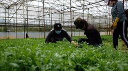 Lâm Đồng tăng cung ứng rau củ cho TP Hồ Chí Minh