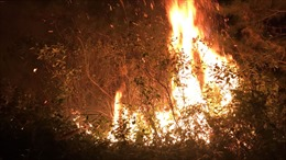 Hà Nội: Đang cháy lớn tại khu rừng trồng huyện Sóc Sơn