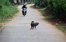 Đắk Lắk ghi nhận 5 trường hợp tử vong do bệnh dại