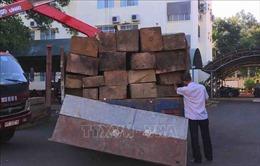Bắt được tài xế chở gỗ lậu đâm móp xe lực lượng chức năng rồi bỏ trốn